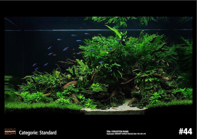 Rank 44 German Aquatic Plants Layout Contest - GAPLC 2014