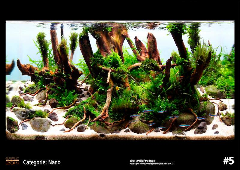 Rank 5 Nano - German Aquatic Plants Layout Contest  - GAPLC 2014