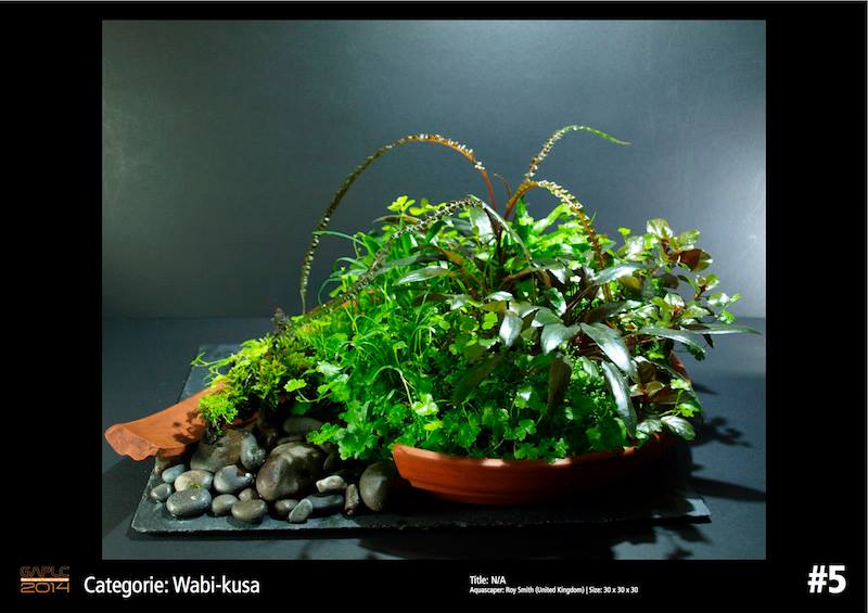 Rank 5 Wabi-Kusa - German Aquatic Plants Layout Contest - GAPLC 2014