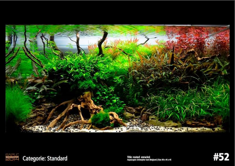 Rank 52 German Aquatic Plants Layout Contest  - GAPLC 2014
