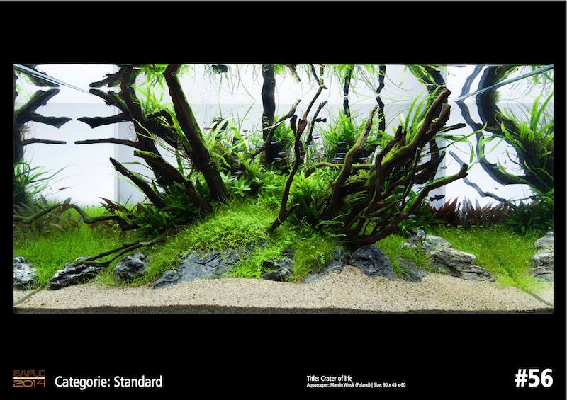 Rank 56 German Aquatic Plants Layout Contest  - GAPLC 2014
