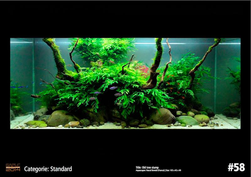 Rank 58 German Aquatic Plants Layout Contest  - GAPLC 2014