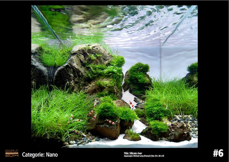 Rank 6 Nano - German Aquatic Plants Layout Contest  - GAPLC 2014