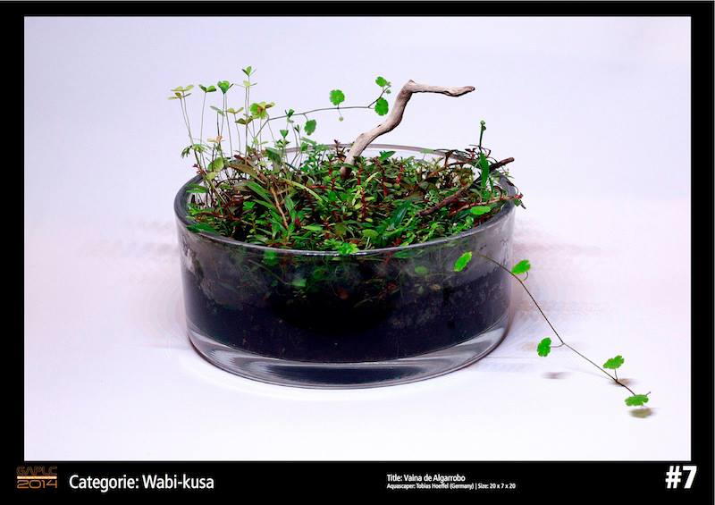 Rank 7 Wabi-Kusa - German Aquatic Plants Layout Contest - GAPLC 2014