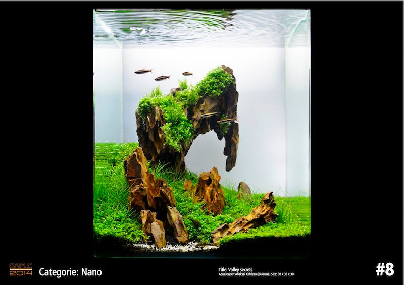 Rank 8 Nano - German Aquatic Plants Layout Contest  - GAPLC 2014
