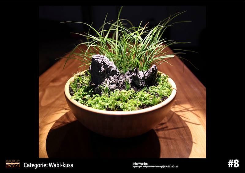 Rank 8 Wabi-Kusa - German Aquatic Plants Layout Contest - GAPLC 2014