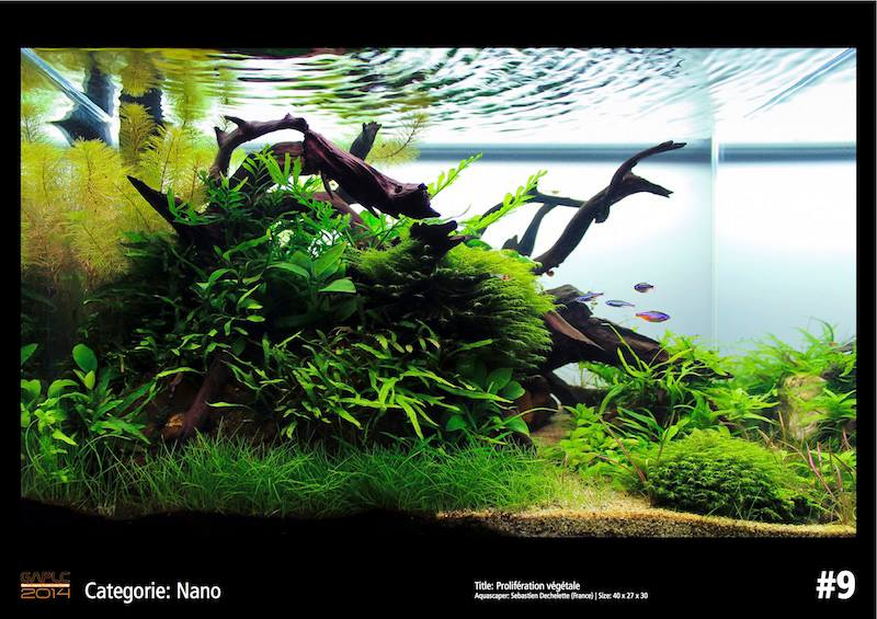 Rank 9 Nano - German Aquatic Plants Layout Contest  - GAPLC 2014