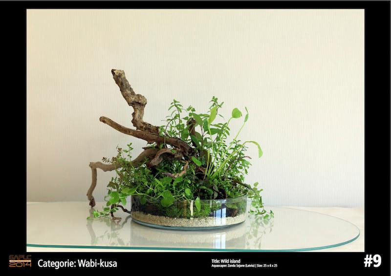 Rank 9 Wabi-Kusa - German Aquatic Plants Layout Contest - GAPLC 2014