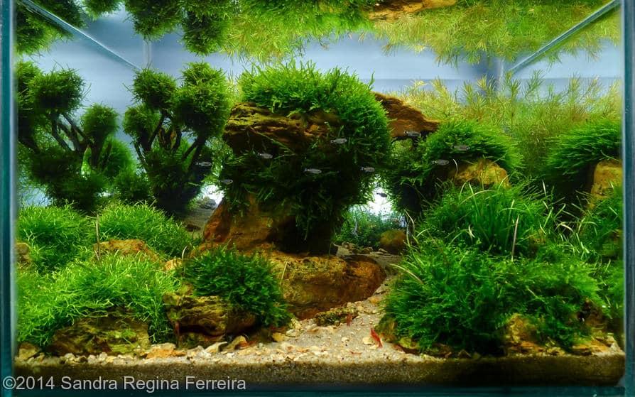 Sandra Regina Ferreira -  International Aquascaping Contest 2014