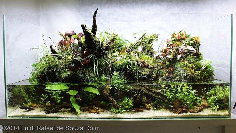 Top 10 colocado Luidi Rafael de Souza Doim - International Aquascaping Contest 2014