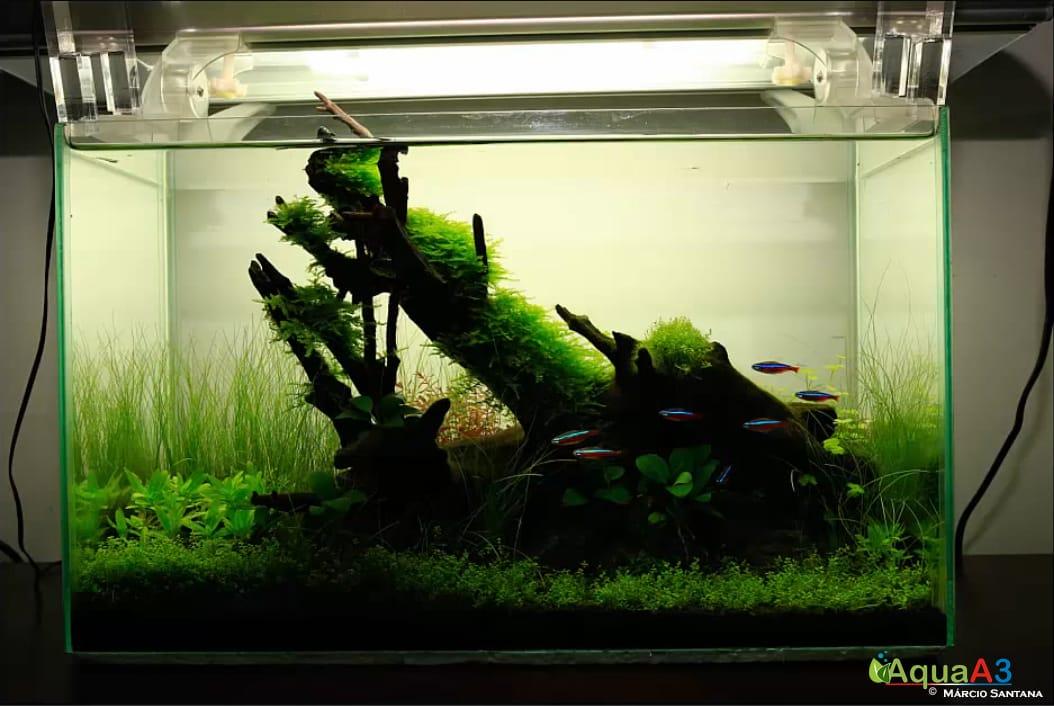 Vídeo Tratamento básico de imagem para aquário