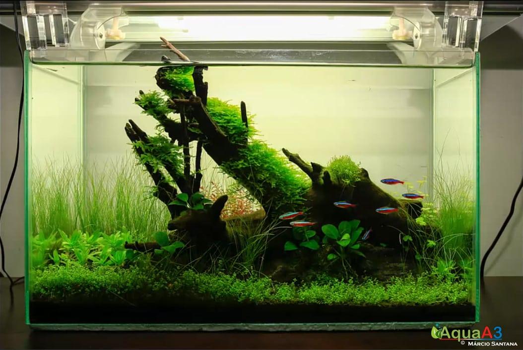 Vídeo Tratamento básico de imagem para aquário plantado