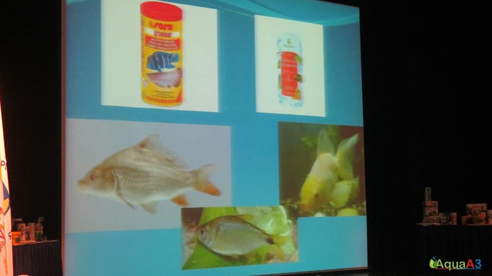 Encontro Brasileiro de Aquarismo (EBA) palestra Renato Moterani sobre Alimentação de jumbos