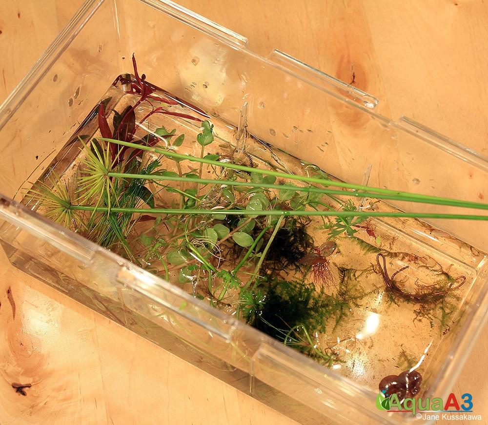 Passo a passo Como fazer um Kokedama para o Wabi-kusa - Plantas adequadas