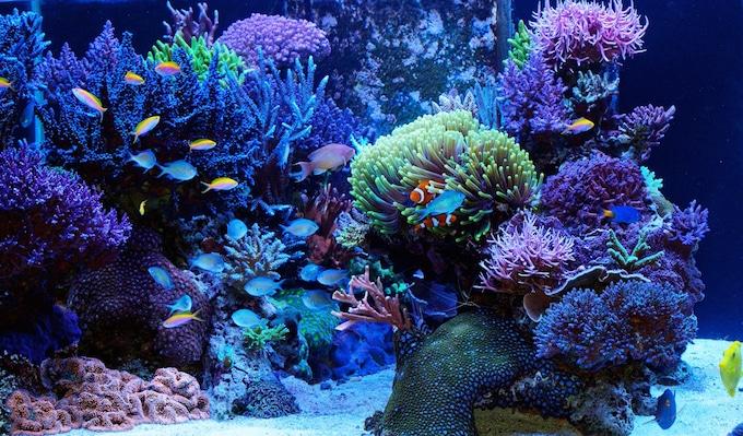 FishBit - Monitorando seu aquário com o Fishbit