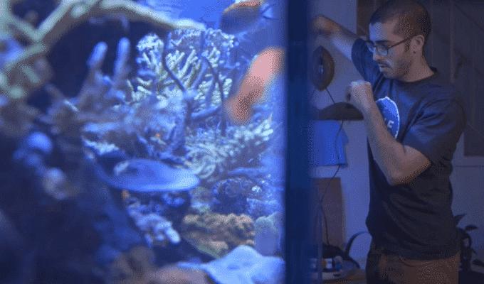 Projeto permite monitorar aquário pelo smartphone - FishBit