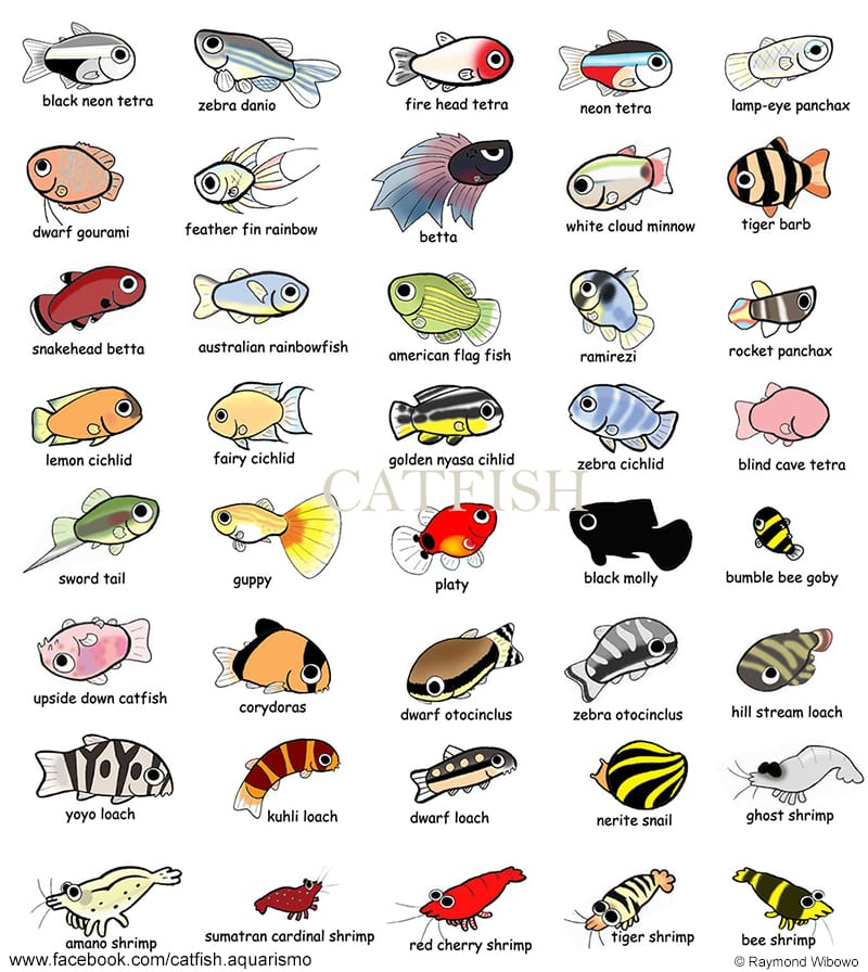 adesivos peixes - CatFish