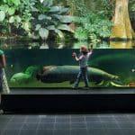 Aquario de Berlim aquario plantado para jumbos by vincenzo di nuzzo • Aquário plantado combina com Jumbos?