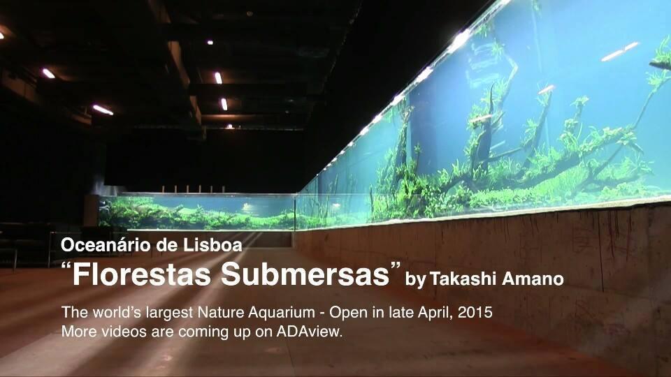 Maior aquário plantado do mundo