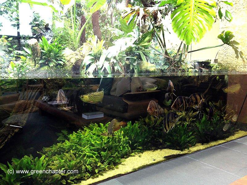 aquário plantado para jumbos e peixes grandes