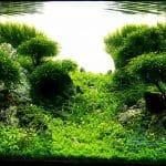 Aquapaisagismo Frederic Fuss 10 • Evolução: Lady Liquid de Frederic Fuss – Rank 14 GAPLC 2013