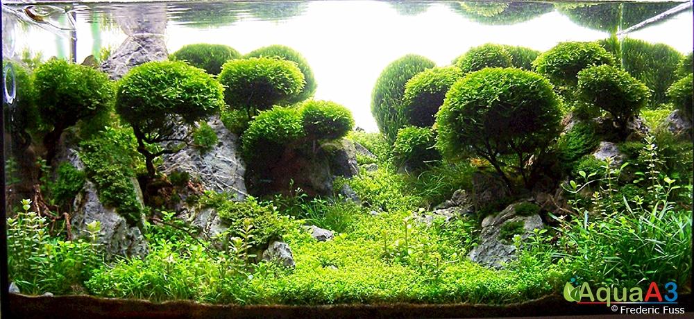 Aquapaisagismo bonsai Frederic Fuss