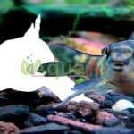 aquaa3 • Evento virtual: Mostre que você é rápido, acerte a imagem do peixe.