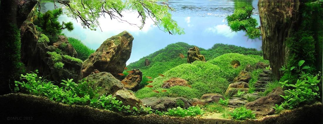 15º Colocado IAPLC 2012 - Timucin Sagel