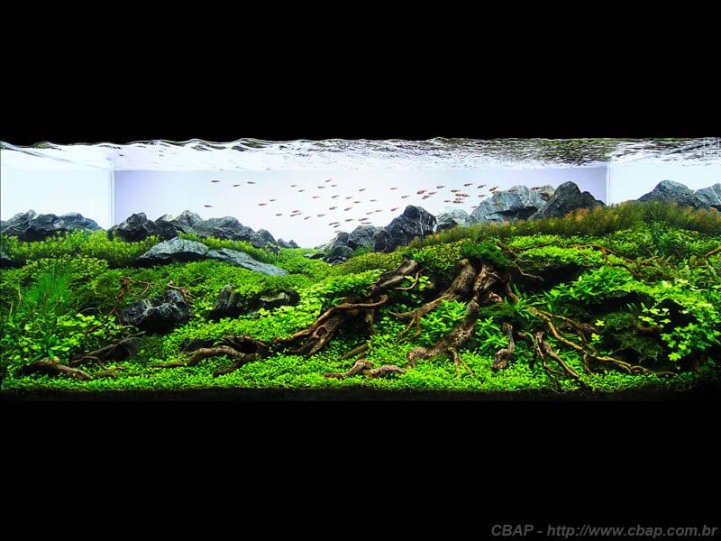 1º Colocado CBAP (Plantados) 2013 - Luis Carlos Galarraga