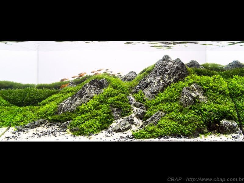 2º Colocado CBAP (Nano) 2013 - Paulo Vitor Pacheco