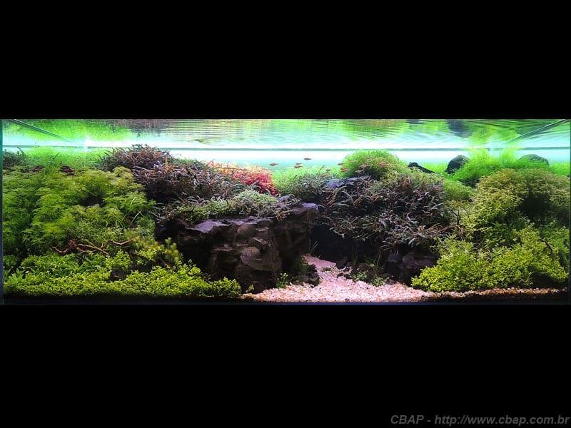 2º Colocado CBAP (Plantados) 2013 - Roberto Luiz Longarço