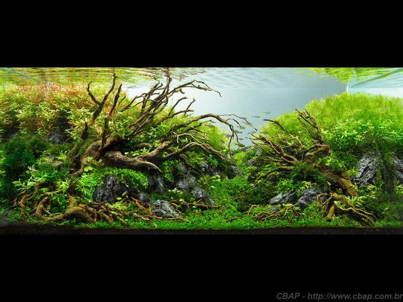 3º Colocado CBAP (Plantados) 2013 - Leandro Artioli
