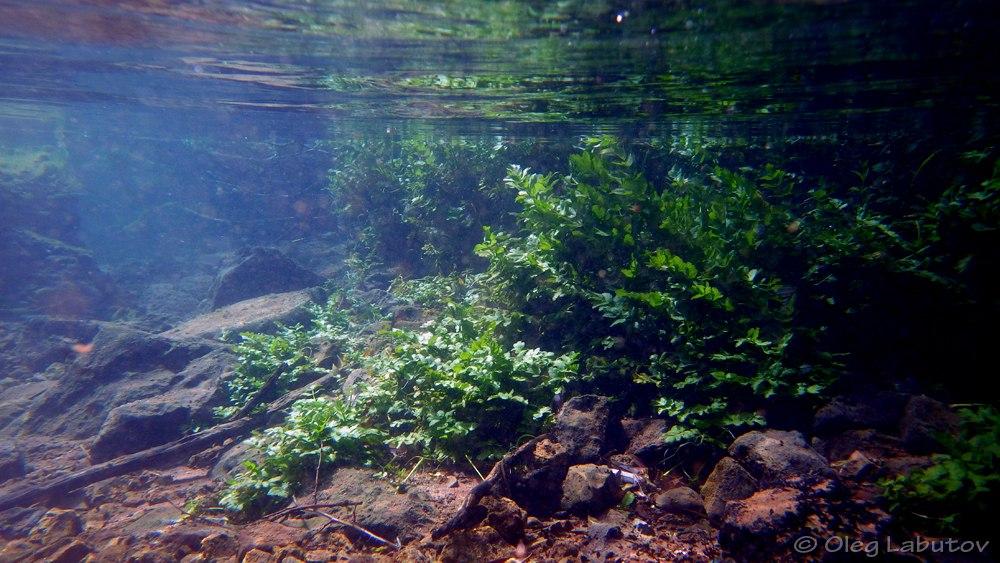 Aquário Biótopo