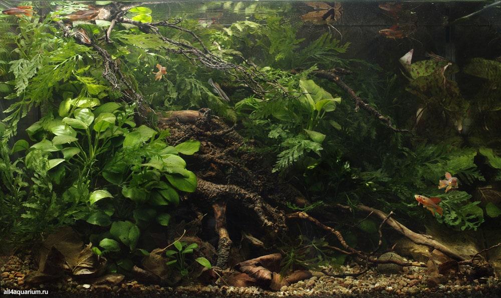 Biotopo Floresta Tropical da Nigéria