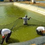 Codevasf • Produção de peixes e crustáceos deve ser potencializada em Alagoas
