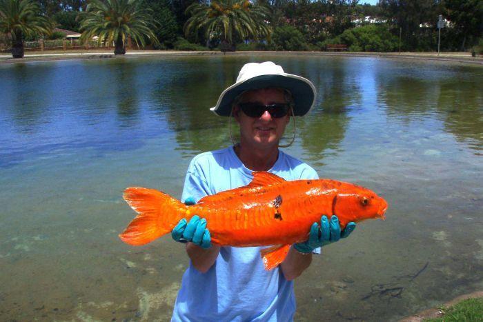 Peixes ornamentais invasores na Austrália
