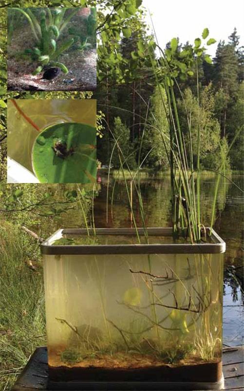 biotopo lago