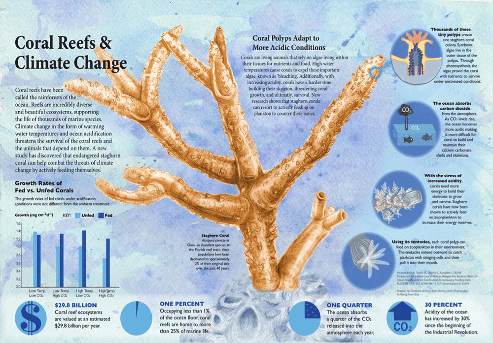 Alimentação de Acropora ajuda a lidar com temperaturas e concentrações de CO2