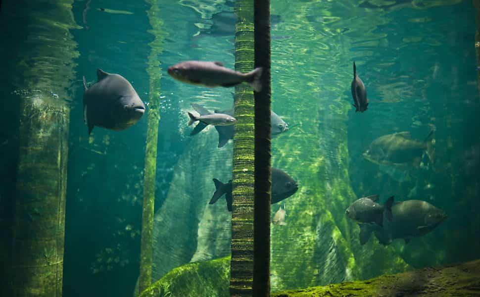 Aquário Municipal de Santos - Peixes
