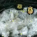 Dois homens foram presos ao tentar importar peixes ornamentais • Dezenas de peixes ornamentais foram apreendidos