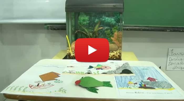 Aquariologia Nas Escolas • Vídeo: Estudantes do Paraná ensinam aquarismo nas escolas