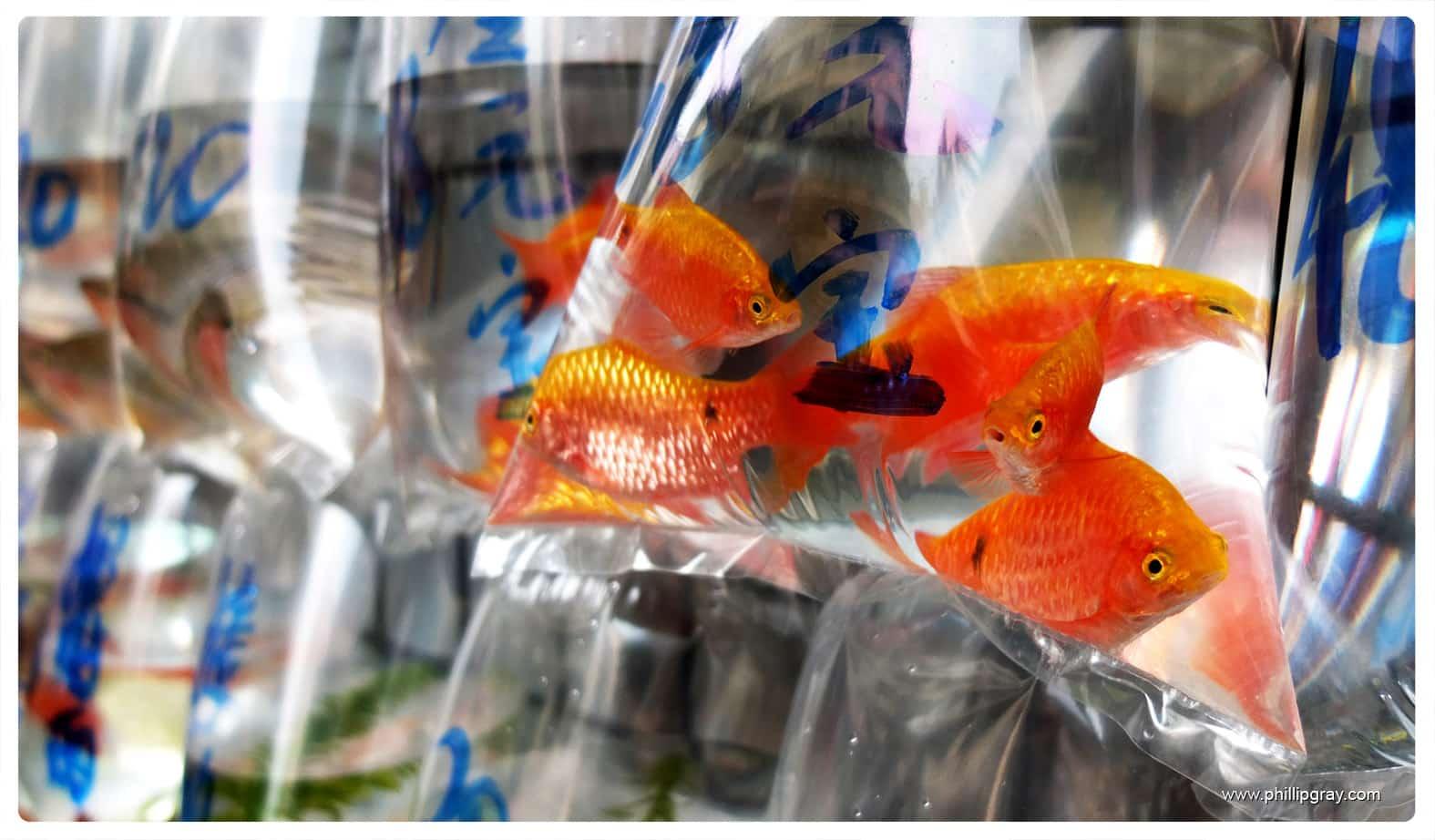 Estudo descobre que bolsas plásticas podem ser mortais para os peixes.