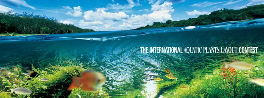O IAPLC não irá desclassificar os aquários também inscritos no CBAP