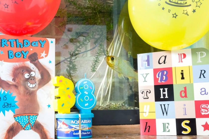 O peixe japones Splash comemora 38 anos