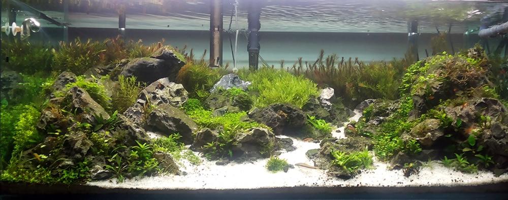 Plantas no aquário Thunder Valley Mountain