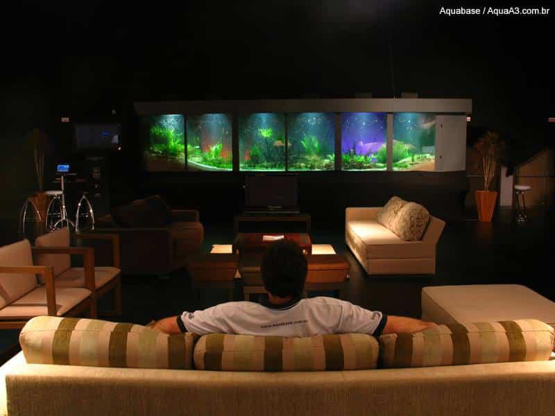 Cientistas estudam o efeito calmante de observar peixes