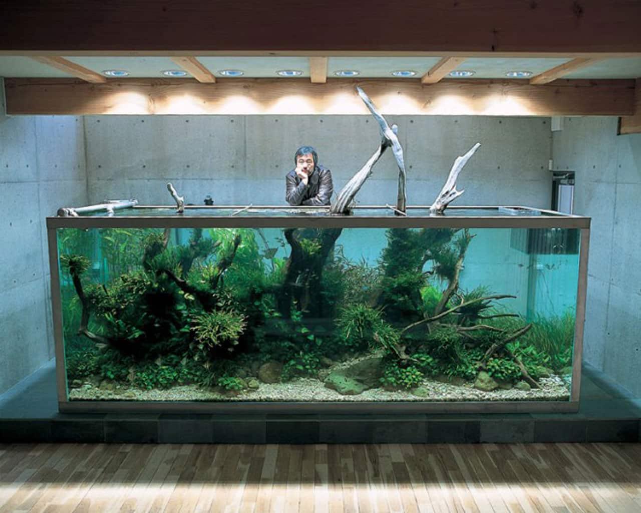Morre o precursor do aquapaisagismo Takashi Amano. • Morre o precursor do aquapaisagismo, Takashi Amano.