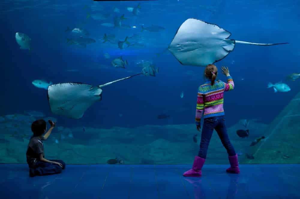 National Marine Aquarium in Plymouth