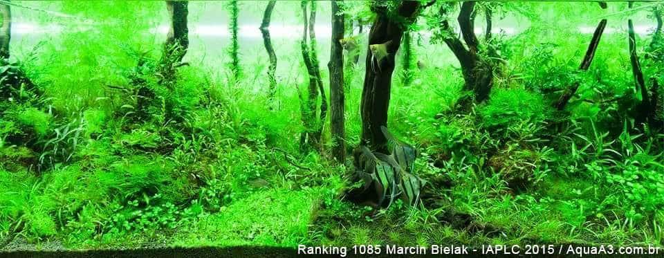 Ranking 1085 Marcin Bielak - IAPLC 2015