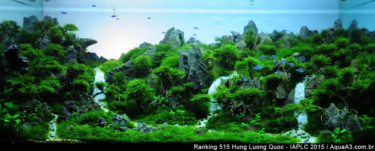 Ranking 515 Hung Luong Quoc - IAPLC 2015